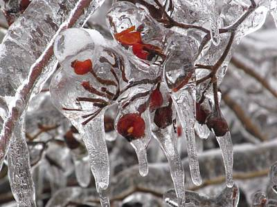Photograph - Winter Berries With Ice by Alfred Ng