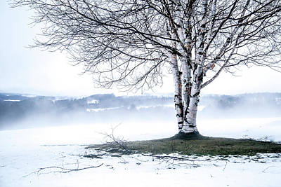 Photograph - Winter Birch by Tim Kirchoff
