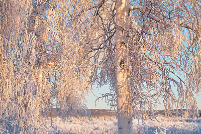 Photograph - Winter Birches by Cathy Mahnke