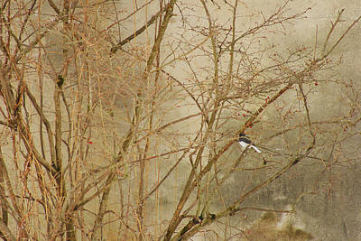Photograph - Winter Bird At The Audubon by Margie Avellino