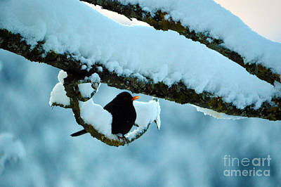 Winter Bird In Snow - Winter In Switzerland Art Print
