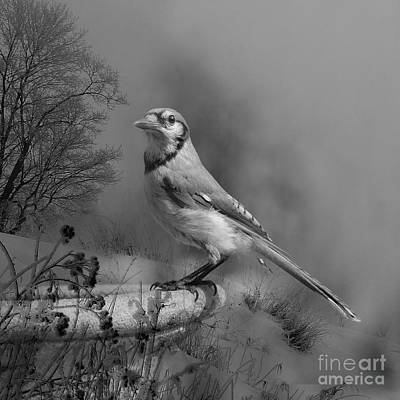 Winter Bird Art Print by Jan Piller