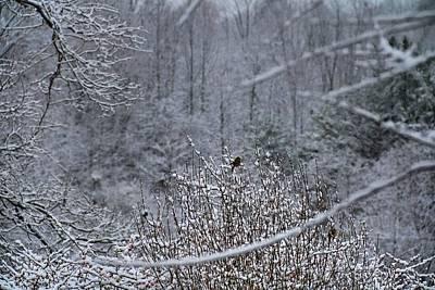 Photograph - Winter Bird by Kathryn Meyer