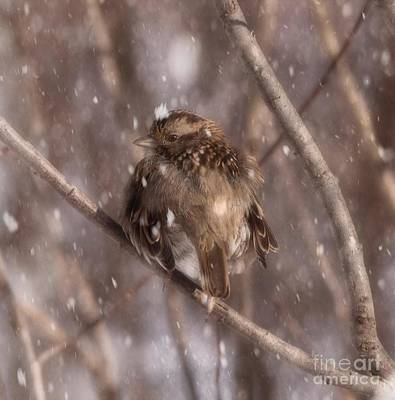 Photograph - Winter Bird by Sherman Perry