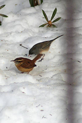 Photograph - Winter Birds by Margie Avellino