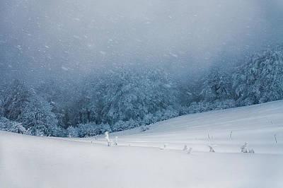 Winter Blizzard Art Print by Evgeni Dinev