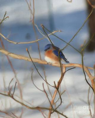 Art Print featuring the painting Winter Bluebird Art by Smilin Eyes  Treasures