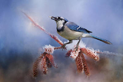 Photograph - Winter Bluejay by TnBackroadsPhotos
