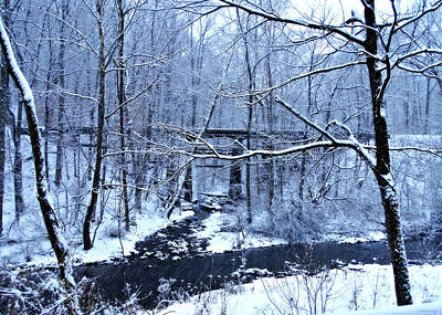 Photograph - Winter Blues by Brenda Conrad