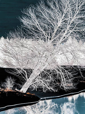 Winter Blues Art Print by Donna Lee
