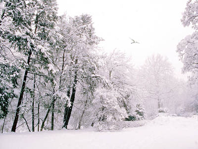 Snowstorm Photograph - Winter White by Jessica Jenney