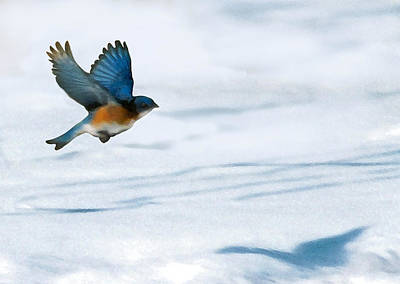 Digital Art - Winter Blues by Steve Karol