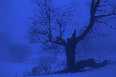 Photograph - Winter Blues by Tim Kirchoff