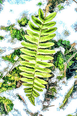 Photograph - Winter Botanical - Fern In The Snow  by Kerri Farley