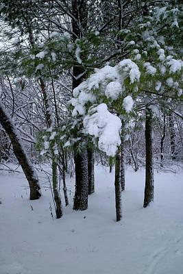 Photograph - Winter Boughs by Scott Kingery