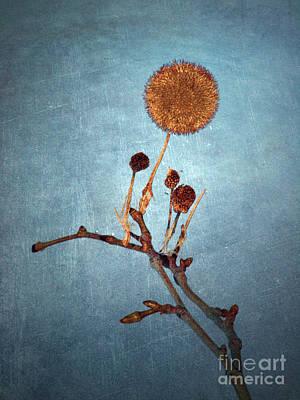 Photograph - Winter Branch by Tara Turner