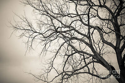 Photograph - Winter Branches by Ana V Ramirez