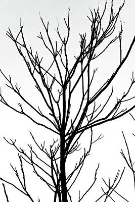Photograph - Winter Branches by Cate Franklyn