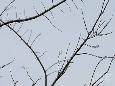 Photograph - Winter Branches by Craig Walters