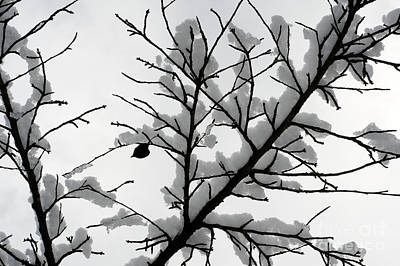 Photograph - Winter Branches by John  Mitchell