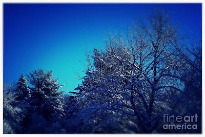 Photograph - Winter Breeze Blue  by Frank J Casella