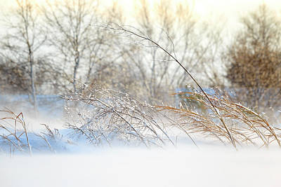 Photograph - Winter Breeze by Travis Rogers