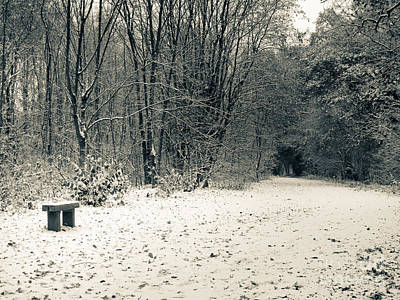 Swindon Photograph - Winter Bridleway by Andy Smy