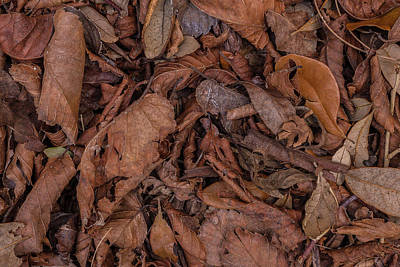 Photograph - Winter Brown by Herb Paynter