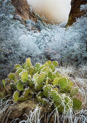 Prickly Pear Photograph - Winter Cacti by Inge Johnsson