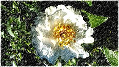 Photograph - Winter Camelia Sketch by Michael Hoard