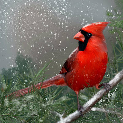 Painting - Winter Cardinal by Becky Herrera