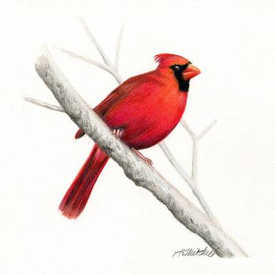 Christmas Cardinal Drawings | Fine Art America