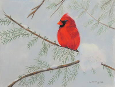 Pastel - Winter Cardinal by Carol Corliss