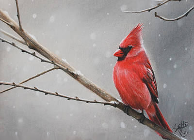 Christmas Cardinal Drawings (Page #2 of 2) | Fine Art America
