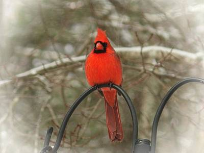 Photograph - Winter Cardinal by Joe Duket