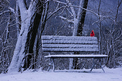 Park Benches Photograph - Winter Cardinal by Ron Jones