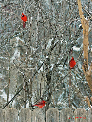 Print featuring the photograph Winter Cardinals by Edward Peterson