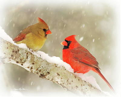 Photograph - Winter Cardinals by Harry Moulton