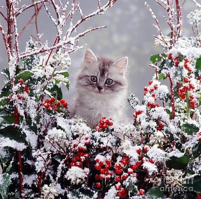 Photograph - Winter Cat by Warren Photographic