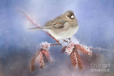 Winter Chill Art Print by Darren Fisher