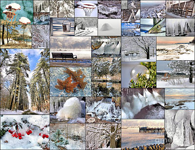 Photograph - Winter Collage  by Janice Drew
