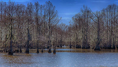 Dappled Light Photograph - Winter Colors by Jim Cook
