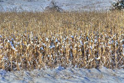 Photograph - Winter Corn, Unpicked by J Laughlin