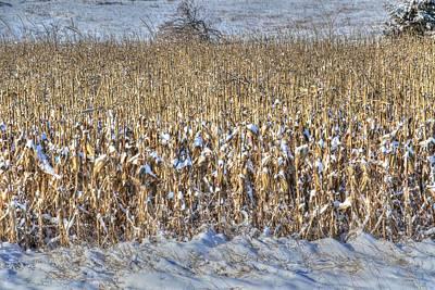 Photograph - Winter Corn, Unpicked by J Laughlin