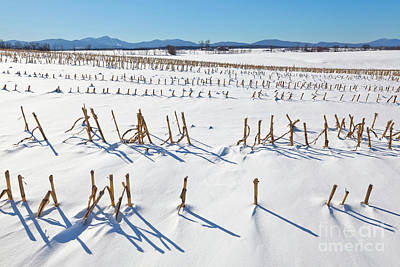Photograph - Winter Cornfield Landscape by Alan L Graham