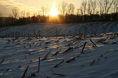 Photograph - Winter Cornstalks by Aggy Duveen