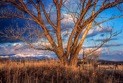 Photograph - Winter Cottonwood Ranch Landscape Colorado by John Brink