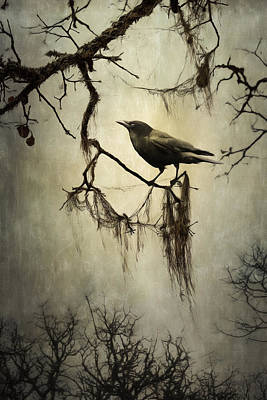 Photograph - Winter Crow by Colleen Farrell