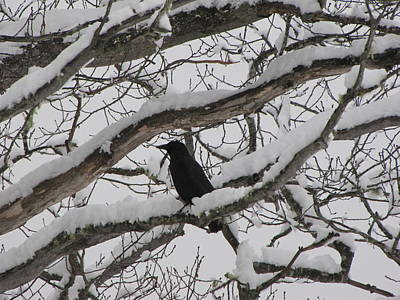 Fall Animals - Winter Crow by Devorah Shoshanna
