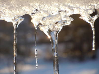Photograph - Winter Crystal 2 by Dan Whittemore